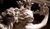 Apollo and Daphne ~ アポロ神とダフネの悲しい恋物語