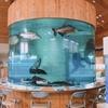 静かな山の中にある淡水魚水族館その1
