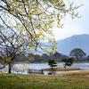 京都・嵯峨野 - 大覚寺大沢池の春