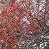 色が恋しい初冬
