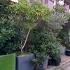 東京都内で珍しい植物が買える、恵比寿のbuzzがおすすめすぎる。
