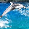 バタフライを上手に泳ぐ方法