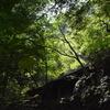 小暑の加持の森遊山 祈る道