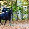馬が山をパトロール (モンロワイヤル下山)【カナダの紅葉】