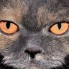 統合失調症の「赤の他人の怒ったような顔写真を見て、自分の父親は怒っているととる」を理解する(統合失調症理解#9)(1/4)