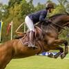 夢占い 馬の夢