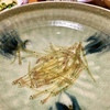 糸島でも 春の風物詩 シロウオ(素魚)の踊り食い♪