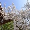 【気象庁】東京では、もう「桜」が満開…平年より「10日」も早く