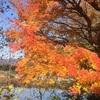 シイタケを堪能する秋