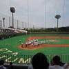 朝夕のプー丸の散歩と、高校野球予選を観戦!