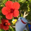 沖縄旅行で手軽でうまいグルメ、カフェ /  周辺の観光地と併せて