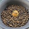 アボカド栽培は土が良いのか水が良いのか