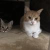 【猫ブログ】たかしとサラは仲いいの?2