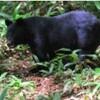 ソロキャンプブームに陰を落とすクマ襲撃増加