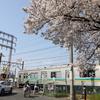 貨物列車撮影 4/6 桜咲く川崎新町界隈