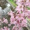 大阪万博公園でお花見してきました。#桜 #地域ブログ