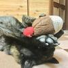 甲斐犬サン、今川焼を食べていたかも、な件〜(///ω///)ナ、ナゼソレヲ……