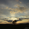 輝く哲学の樹