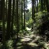 梅雨明けは暑いので木陰で上流へ