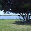 新緑の荒川サイクリング(その1)