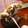 愛猫と遊ぶよろこび③