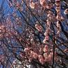 立春も終わりもうすぐ春ですね