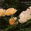 ザ・ラーク・アセンディング 2017年春の開花