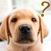 犬の認知症の症状とは?認知症が疑われる兆候や認知症ケア