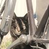 2月26日 東向島から堤通までの猫さま歩き とその情景