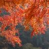 紅葉狩りで考えた「紅葉撮影のコツ」