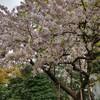 【花見】皇居乾通りで桜を堪能してきた【平成最後】