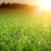 ゴルファーたるもの!芝生を愛せよ!!庭の芝生の更新作業!