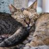 ただひたすらに寝ているネコさんの写真を撮った、とある残暑の1日