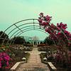 【写真複製・写真修復の専門店】横浜 八景島シーパラダイス バラ園