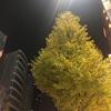 新宿のビルと紅葉♪♪