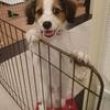 子犬はいつ迎えるのがいいか(一人暮らし編)