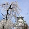 大阪城公園の桜(8)