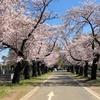 府中の周辺で花見散歩・後半