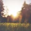 綺麗な朝顔が咲いていました。:朝顔の花言葉、英語名は?