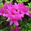 「ひろば・賢治ガーデン」の植栽を、写真パネルで紹介する計画…。