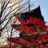 京都、真如堂の紅葉2017/11/24
