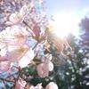 5月瞑想会御礼~と、十勝花巡りやら妖精の話しやら♡