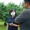 モモのせん孔細菌病。現地調査と県申し入れ