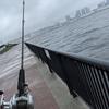 ★ 大雨 強風の『豊洲ぐるり公園』でシーバスを狙う、、、ただ狙う(笑)!!