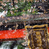 一足早いニセ桜吹雪