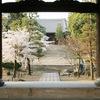 京都桜シリーズ 金戒光明寺