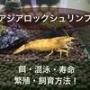 アジアロックシュリンプの飼い方!餌・寿命・混泳・繁殖・飼育方法!