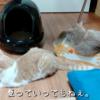 雨田甘夏、清掃です。【猫とお水とお風呂事情】