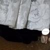 ◆隠れ上手なネコ