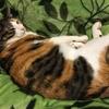 【愛猫日記】毎日アンヌさん#58